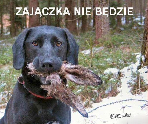0_0_503664941_Zajaczka_nie_bedzie_przez_
