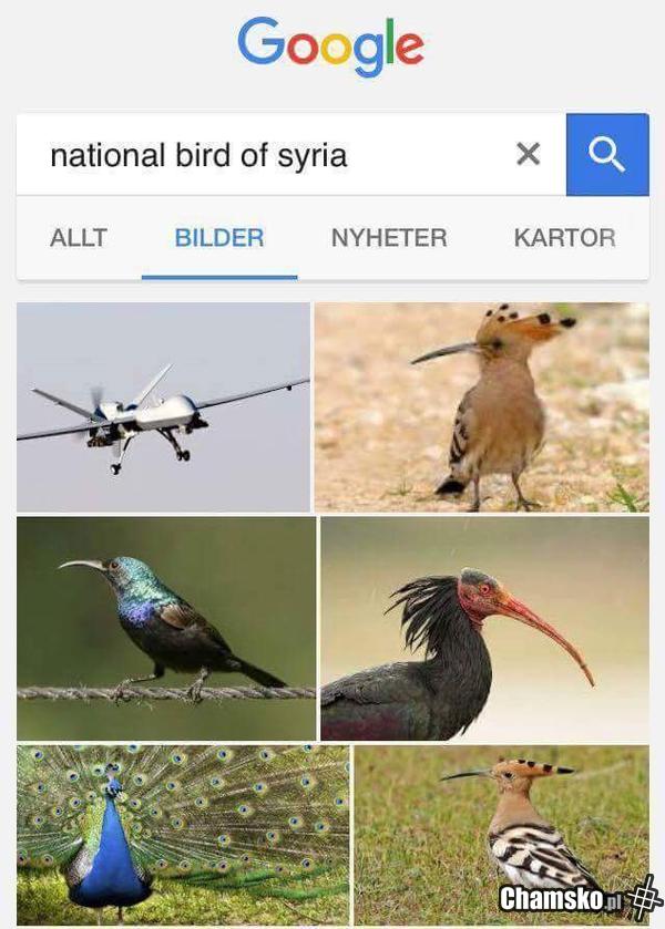 Ptaki popularne w Syrii