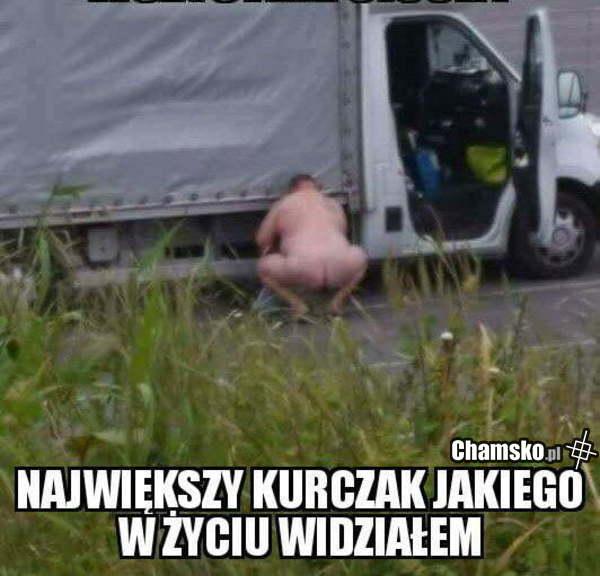 [Obrazek: 0_1_89878_Ogromny_kurczak_przez_pluszowymis.jpg]