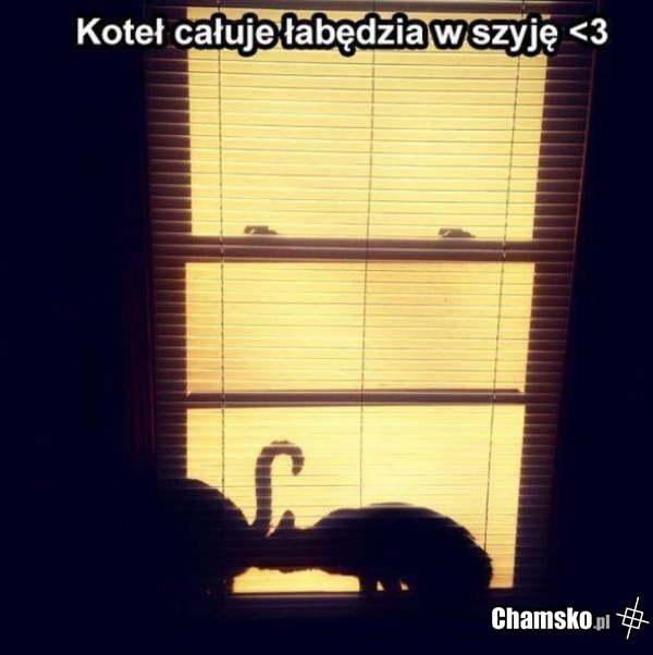 [Obrazek: 0_1_90693_Romantyczny_kot_przez_pluszowymis.jpg]