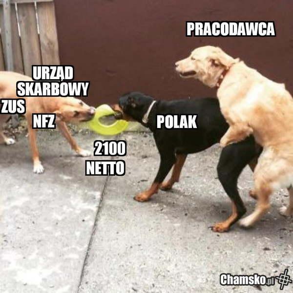 polska dymana